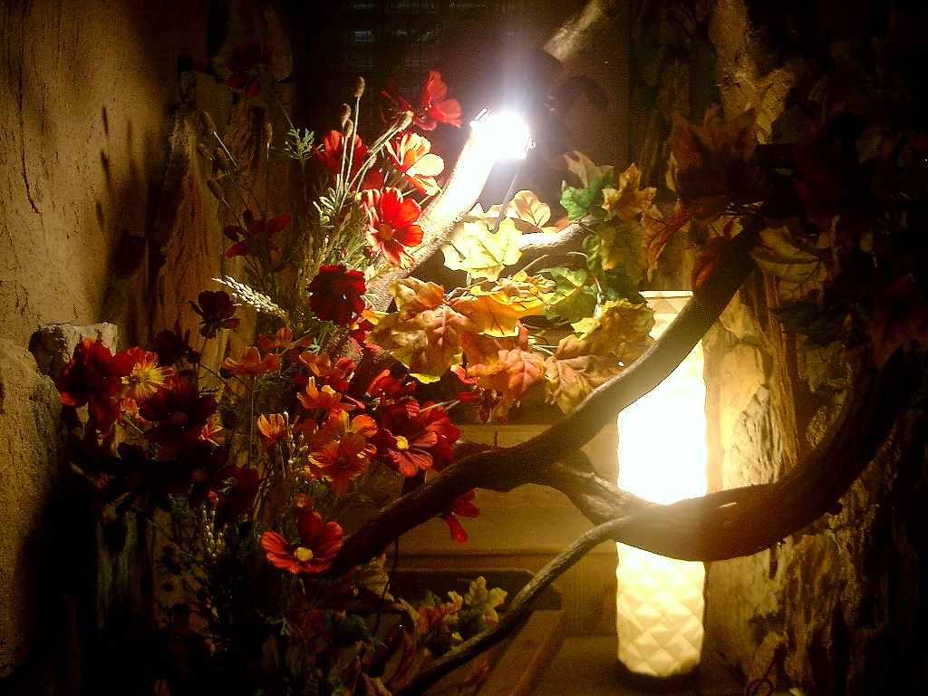 秋の装飾、コスモス装飾ディスプレイ